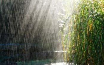 别哭了,雨下的已经够大了