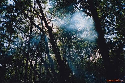树林黑夜风景图片