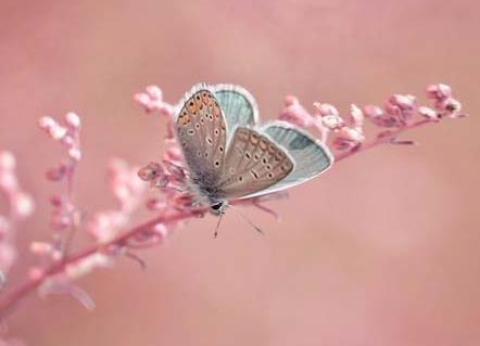 你若能作茧自缚,就能破茧成蝶